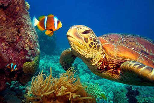 Ribice i kornjače